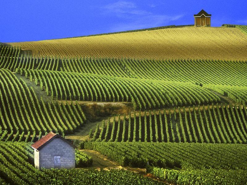 Виноградники Бордо. Куда лучше поехать летом во Франции, что посмотреть летом во Франции. Во Францию летом - куда лучше отправиться. Лавандовые поля Прованса, фестивали, пляжи
